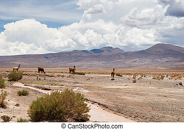 jujuy,  Argentina,  andes,  Salta, norteño