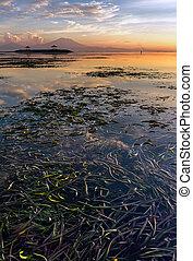 Jukung at Karang Beach Sanur, Bali Indonesia