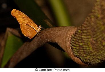 Julia Longwing Butterfly - A Julia Longwing Butterfly (Dryas...