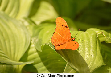 Julia moth sitting on a soft bed of green leaves - Beautiful...