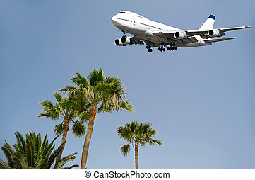 Jumbo and palms - Jumbo jet plane is flying over palms ready...