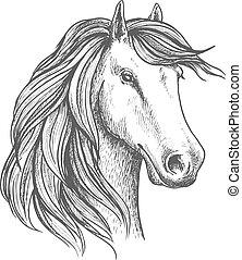 jument, isolé, cheval arabe, croquis, tête
