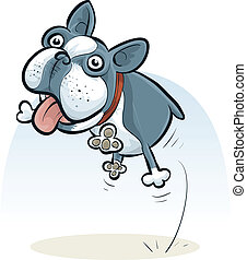 Jumping Boston Terrier - A cartoon Boston Terrier jumping...