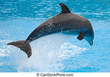 Jumping dolphin - Happy dolphin is jumping out of the water