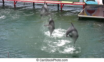 jumping dolphins - Jumping dolphins