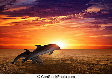Jumping dolphins - Marine life background - jumping dolphins...