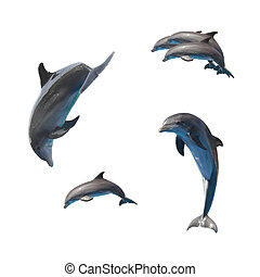 jumping dolphins on white - set of jumping dolphins isolated...