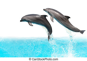 Two dolphins are jumping out of the water isolated on white background with clipping path