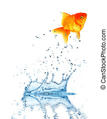 Jumping fish out of water, concept of challenge. Isolated on...