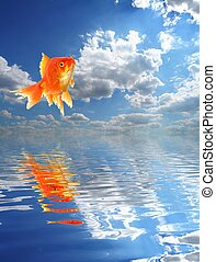 goldfish - jumping goldfish and ocean with sky and water...