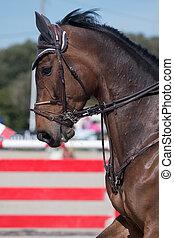 Jumping horse head