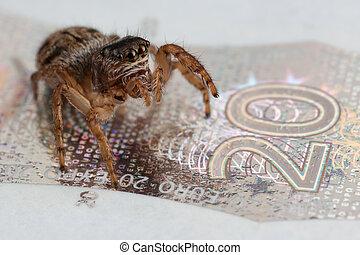 Jumping spider on a twenty euros