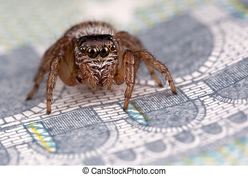 Jumping spider on five euros