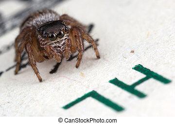 Jumping spider on hundred dollars 2