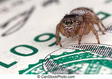 Jumping spider on hundred dollars