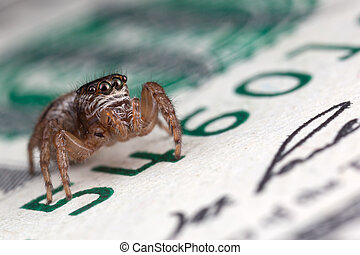 Jumping spider on the one hundred dollars