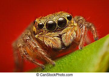 The jumping spider family Salticidae contains more than 500 described genera and about 5,000 described species making it the largest family of spiders with about 13 percent of all species.
