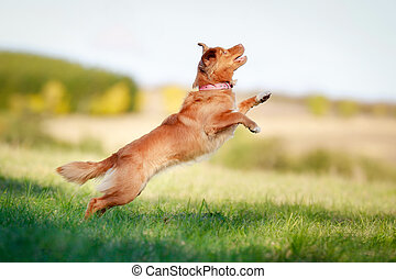 Jumping toller