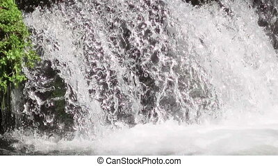 Jumping trout - brown trout jumping waterfalls to return to...