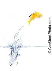 Jumping yellow fish