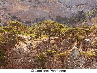 junípero, can., montanhas, árvores, poderoso, pinho,...