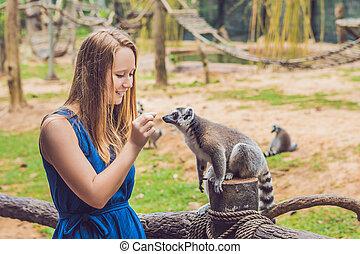 junge frau, gleichfalls, gefüttert, klingeln-tailed lemur,...