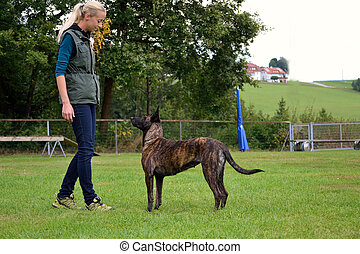 Hundeausbildnerin beim Training - Junge Hundeausbildnerin ...