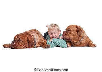 junge, ihr, hunden, spielende