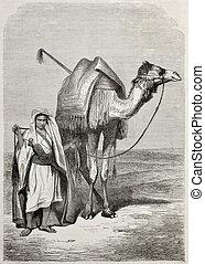 junge, kamel