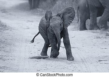 junger, elefant, spielen, auf, a, straße, während, familie, futtern, künstlerisch, bekehrung