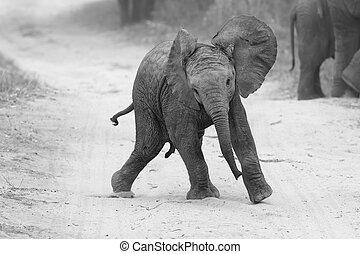 junger, elefant, spielen, auf, straße, während, familie, futtern, nah, in, künstlerisch, bekehrung