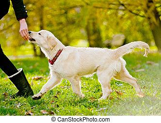 junger hund, apportierhund