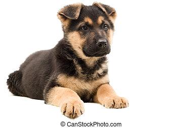 junger Hund, Aussehen