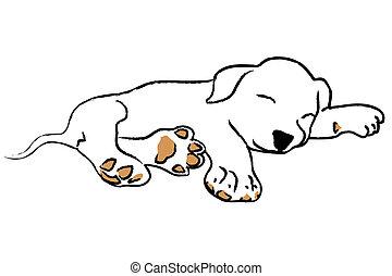 junger hund, eingeschlafen