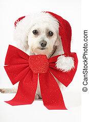 junger hund, für, weihnachten