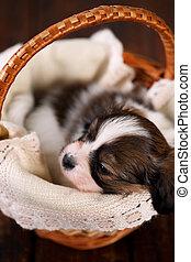 junger hund, geschenk, in, a, korb