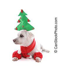 junger hund, hund, an, weihnachtszeit