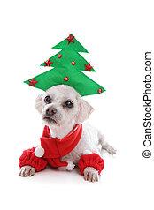 junger hund, hund, tragen, weihnachtsbaum, hut