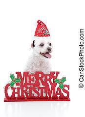 junger hund, hund, und, frohe weihnacht, zeichen