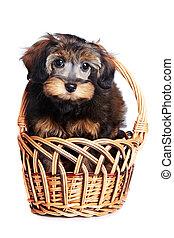 junger hund, in, a, basket.