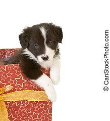 junger hund, in, a, geschenk