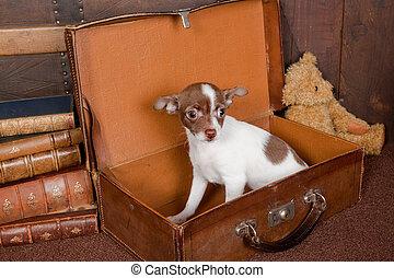 junger hund, in, a, koffer