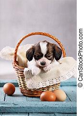 junger hund, in, a, korb, mit, eier
