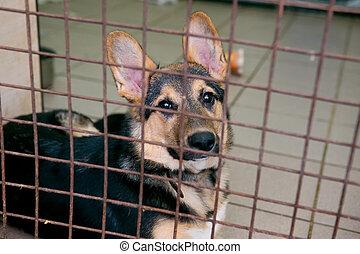 junger hund, in, a, unterstand, für, wohnungslose, hunden