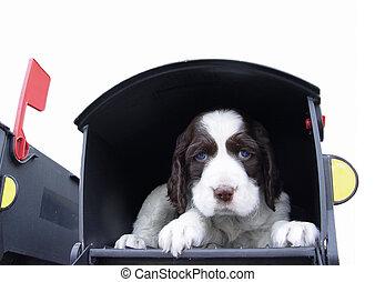 junger hund, in, der, post