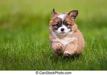 junger hund, läufe