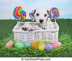 junger Hund, Ostern