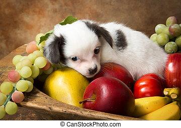junger Hund, Schüssel, Fruechte