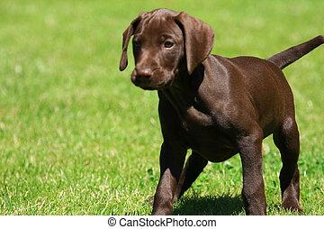 junger hund