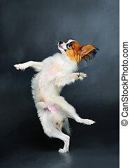 junger hund, tanzen